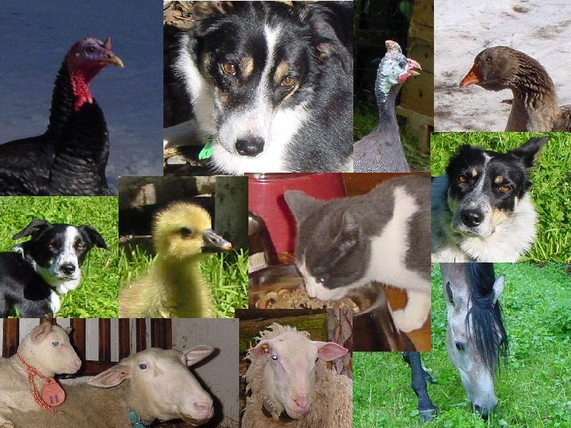 Einige unserer tiere